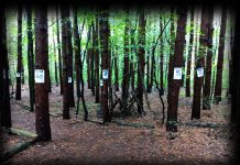 Edited image of section of Terrorfied Forest